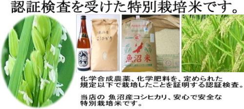 kome_tokusai_top_500