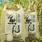魚沼産コシヒカリ10kg29年度産【検査一等米・白米】当地農家のお米