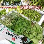 山菜+そば お試しセット
