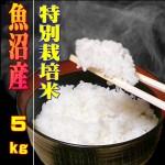 新米・29年度産】白米5kg 【魚沼産コシヒカリ特別栽培米】農薬を抑えた当地農家のお米