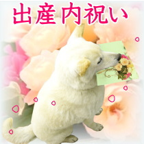 utiiwai_sussan_210